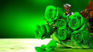 green roses hd wallpapers