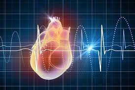 heart rate heart health