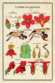 School Chart Flower Pollination Interior Elements
