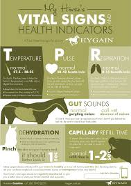 Know Your Horses Vital Signs Hygain Horse Feed