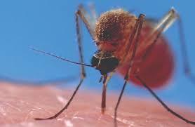 Mosquito Bites: Allergy Reactions & Symptoms