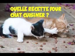 raw feeding chat recette
