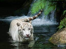 Beautiful Animals Wallpapers - Top Free ...