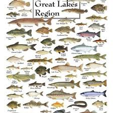 Fishes Of The Great Lakes Puzzle Freshwater Fish Great