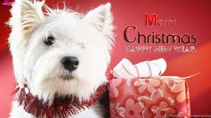 cute merry christmas wallpaper dogs.  Dogs Popular Intended Cute Merry Christmas Wallpaper Dogs