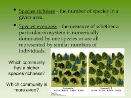 Species Diversity Definition Chapter 5 Evolution Of Biodiversity Earth Is Home To A Tremendous