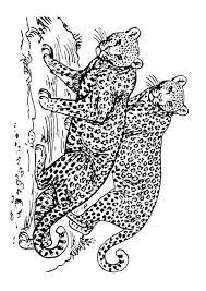 Kleurplaat Panter Volwassen Ausmalbild Jaguar Im Portrt
