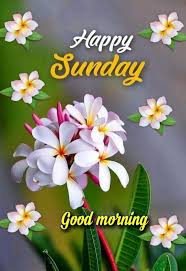Happy Sunday Greetings Quotes Happy Sunday Morning Good Morning