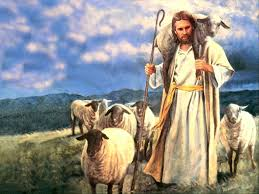 Image result for picture of lost sheep