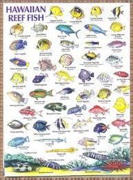 60 Best Fish Ive Seen Snorkeling Images Fish Snorkeling