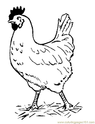 Small Picture Hen Coloring Page Free Chicks Hens and Roosters Coloring Pages