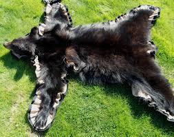 black bear rug wall hanger