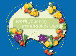 Image result for picking fruit australia