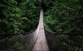 Bridge wallpaper, Forest wallpaper ...