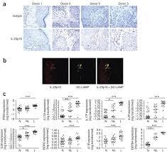 Development, cytokine <b>profile</b> and function of <b>human</b> interleukin 17 ...