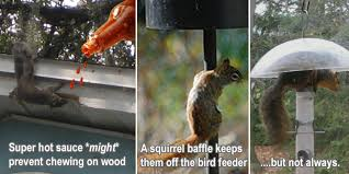 5 Tricks To Keep Squirrels Out Of Your Plants  The Scrap ShoppeHow To Protect Your Fruit Trees From Squirrels