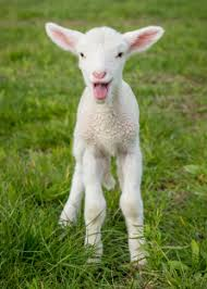 real baby farm animals. Modren Baby Why Are Baby Farm Animals Typically Born In The Spring Inside Real Iowa Agriculture Literacy  WordPresscom