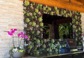 succulent plant design painting with plants san diego area comfortable living wall original 3 on live succulent wall art with succulent living wall 4023