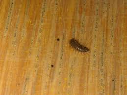 Maggots On Kitchen Floor Natureplus Identifying The Following Larvae Caterpillar Like