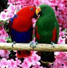 pictures of 2 parrots kissing video youtube