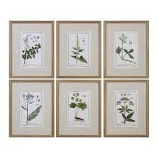 floral botanical study 6 piece framed graphic art set on framed plates wall art with wall art birch lane