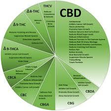 Cbd Decarboxylation Chart Cbda Und Cbd Dr Raphael Mechoulam And Cbda The Heroes