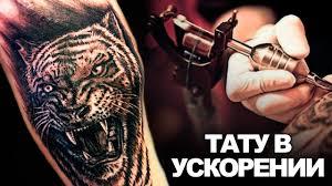 тату тигр перекрытие татуировка в екатеринбурге