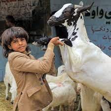 Eid al-Adha - HISTORY