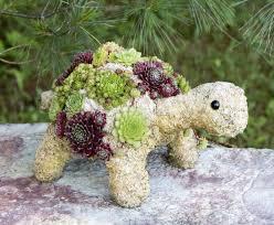 baby succulent turtle ga 4005