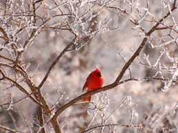 42+ Snow Bird Wallpaper on HipWallpaper ...