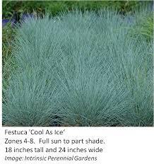 Tall Decorative Grass 4 New Decorative Grass Varieties Kaufman County Master Gardener