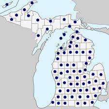 Ranunculus hispidus - Michigan Flora