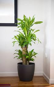 Big indoor plants