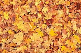 Image result for royalty free pics autumn leaves