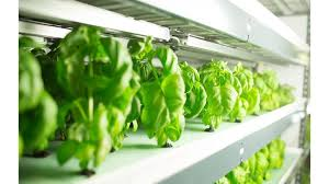 freshbox farms is based in millis and uses the method of hydroponics or growing without