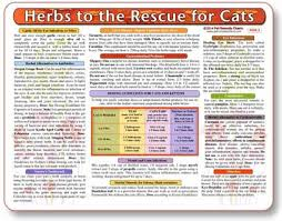 Natural Remedies And Home Cures For Cats