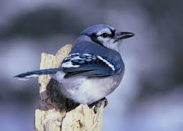 how to keep birds away from garden. Tips For Keeping Birds Away From Your Garden How To Keep
