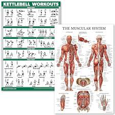 Kettlebell Exercise Chart Quickfit Kettlebell Workouts And Muscular System Anatomy Poster Set Laminated 2 Chart Set Kettle Bell Exercise Routine Muscle Anatomy Diagram