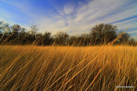 tall grass field sunset. Tall Grass In The Sun Field Sunset