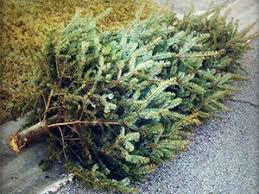 <b>Christmas Tree</b> Collection Schedule | Hagerstown, MD - Official ...