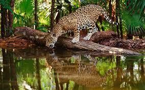 Wild Animals Wallpaper HD