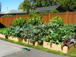 Kitchen Garden Planter Kitchen Garden Raised Beds Wwwplentus