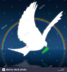 dove holding olive branch dove holding an olive branch with rainbow in background stock photo