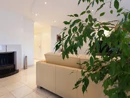 Orchidee, bromelie, piante carnivore, bonsai, piante grasse e succulente ed altre ancora! Piante D Appartamento Alte 5 Esemplari Per Grandi Spazi One Giardinaggio