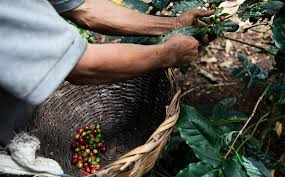 sustainably sourced coffee folgers coffee who folgers® supports