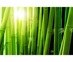 feng shui paintings for office. Feng Shui Bamboo Painting-2059 Paintings For Office N