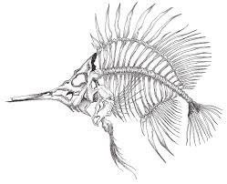 Dessin Dun Poisson Squelette Drawing Of A Skeleton Fish Linewrk