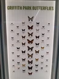 Moth Identification Chart Butterfly Identification Chart From Griffith Park Los