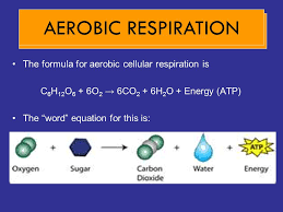 write the overall equation for cellular respiration in both