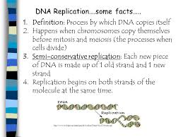 Dna Replication Definition Dna Replication Some Facts 1 Definition Process By Which Dna